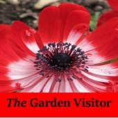 The Garden Visitor2